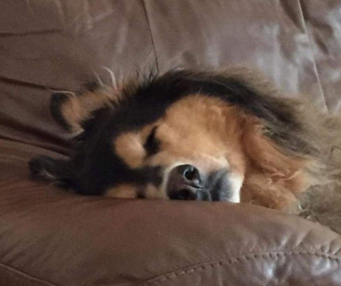 Trip Sleeping